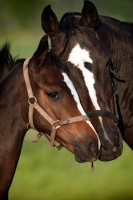 Nature vs. Nurture: What Shapes a Foal's Future?