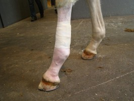 PROMPT TREATMENT OF LEG DEFORMITIES PREVENTS MANY FRUSTRATIONS