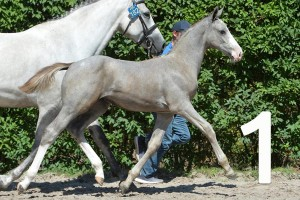 Foal Championships and Auction Selections